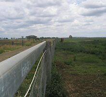 Fence Line by Melissa Park