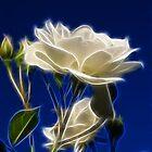 White rose by SarahTrangmar
