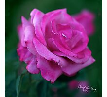 rose signed Photographic Print
