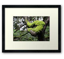 Moss Framed Print