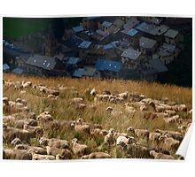 Sheeps in the mountains of Oisan  Poster