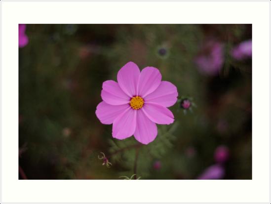 Flower by Stanton Hooley