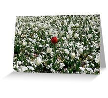 Lonely Red Tulip Greeting Card