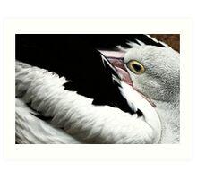 Pelican Hide Art Print