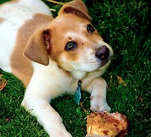 Puppy And His Bone by georgiaart1974