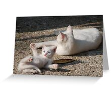 White Kitten with Mother  Greeting Card