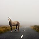 Sallygap horse by DeirdreMarie