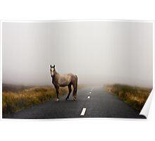 Sallygap horse Poster