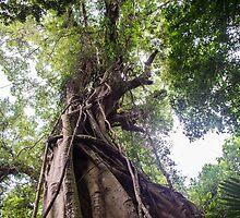 Minumurra Falls Rainforest by sharon2121