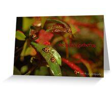 The Ladies Gathering © Vicki Ferrari Photography Greeting Card