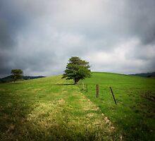 1 Tree by sharon2121
