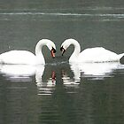 swans at kedlestone by AngelaFoster