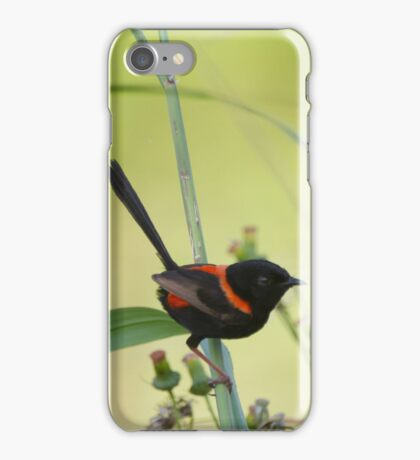 The Red Wren iPhone Case/Skin