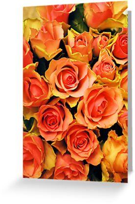 Fabulous roses by KateSecretwomen