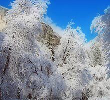 Yosemite #13  by SueAnne