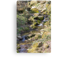 stream in the forest Canvas Print