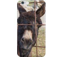 donkey in the farm iPhone Case/Skin