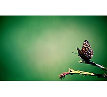 butterfly on green Photographic Print