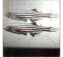 « des poissons » Photographic Print
