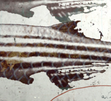 « des poissons » Sticker