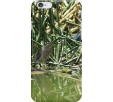 Striated Heron in a Lake iPhone Case/Skin