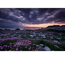 Guernsey Sea Pinks Photographic Print