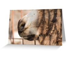 muzzle donkey Greeting Card