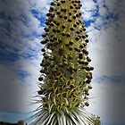 Silversword In Bloom by DJ Florek