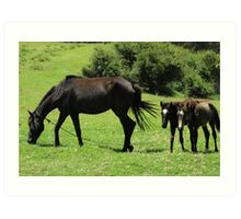 Mare and Colts in a Pasture Art Print
