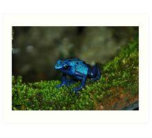 Poison Dart Frog Art Print