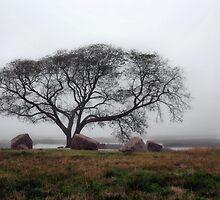 Tree In Mist by SuddenJim