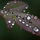 Rain by Portia Soderberg