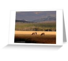 Gibbon River Valley, Yellowstone Greeting Card