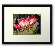 Raindrops on Roses II Framed Print