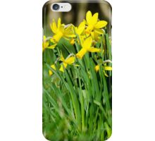English Native Daffodils iPhone Case/Skin