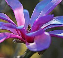 Magnolia # 2 by Evita
