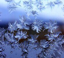 Frosty by Tammy Hale