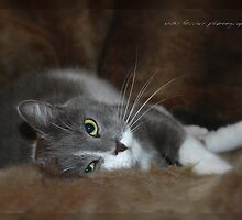 Furry Cat © Vicki Ferrari by Vicki Ferrari