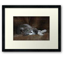 Furry Cat © Vicki Ferrari Framed Print