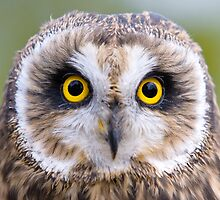 Stare into my eyes by Bruce Gauger