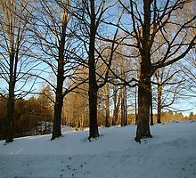 Crest of the Hill in Winter by Linda Marlowe