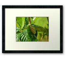 Froggie on a leaf HDR Framed Print