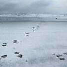 footprints on snow by Daphne Kotsiani