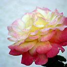 Happy Rose by Zachary Matney