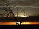 """Faded Dawn"" by debsphotos"