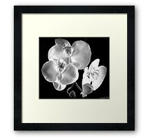 BW Orchid Framed Print