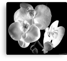 BW Orchid Canvas Print
