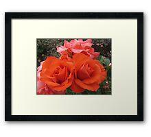 Orange Roses, a Symbol of Passion Framed Print