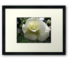 """The """"Bridal"""" Rose Framed Print"""