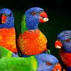 Rainbow Lorikeets by Matthew Smith